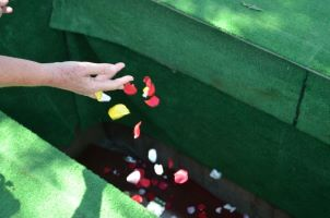 Sprinkling petals onto coffin in grave - tiny